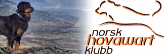 Norsk Hovawart Klubb